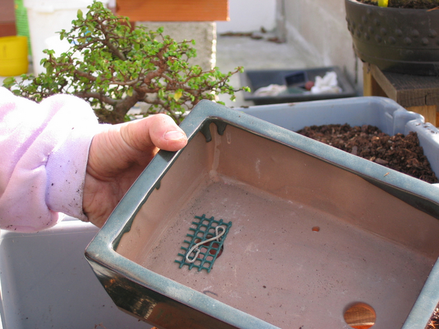 preparação do vaso para o ulmus parvifolia - colocação dos arames na rede e no vaso